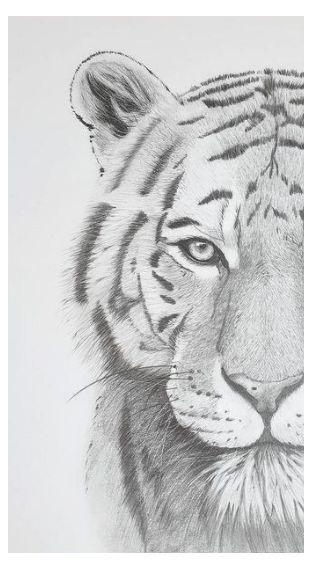 Anita tiger